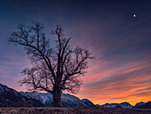 A tree on a hill at the Blue Hour with a view of the Karwendel and Wetterstein Mountains, Eschenlohe, Upper Bavaria, Germany