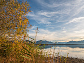 View through the reeds to the Chiemsee and the Chiemgau Alps and the Kaisergebirge, Chieming, Upper Bavaria, Germany
