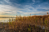 View on reed and sunset at Chiemsee, Chieming, Upper Bavaria, Germany