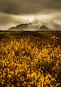 Misty mountain scene, near Vik, Southern Iceland, Polar Regions