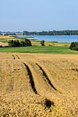 Landscape near Neuenkirchen, Ruegen, Baltic Sea Coast, Mecklenburg-Vorpommern, Germany