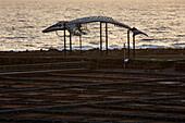 Sunrise at the Museum of Salt at Las Salinas near Caleta de Fustes, Fuerteventura, Canary Islands, Islas Canarias, Atlantic Ocean, Spain, Europe