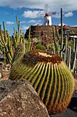 Cactus garden near Guatiza, Jardín de Cactus, César Manrique, Lanzarote, Canary Islands, Islas Canarias, Spain, Europe