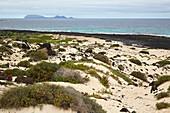 Malpais de la Corona, Volcanic landscape with dunes between Punta Prieta and Órzola, Lanzarote, Canary Islands, Islas Canarias, Spain, Europe