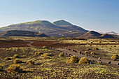 View across lava fields at the wine growing area La Geria, Lanzarote, Canary Islands, Islas Canarias, Spain, Europe