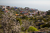 Spring near Chio, Tenerife, Canary Islands, Islas Canarias, Atlantic Ocean, Spain, Europe