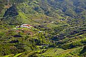 View across luxuriant vegetation at Las Portelas, Teno mountains, Tenerife, Canary Islands, Islas Canarias, Atlantic Ocean, Spain, Europe
