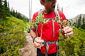 Mid section of man hiking and holding bush of blueberries, Merritt, British Columbia, Canada