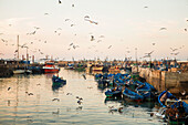 Large flock of seagulls flying over historic medina port filled with moored boats, Essaouira, Morocco