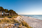 Beach, Gellen, Hiddensee island, Mecklenburg-Western Pomerania, Germany