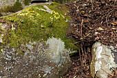 Petroglyphen, Parque Cultural La Zarza, Kulturpark La Zarza, La Zarcita, Kunst der Ureinwohner, prähistorisch, bei La Mata, UNESCO Biosphärenreservat, La Palma, Kanarische Inseln, Spanien, Europa