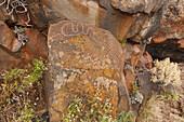 petroglyphs, Barranquillo del Calvario, indigenous art, near Santo Domingo de Garafia, UNESCO Biosphere Reserve, La Palma, Canary Islands, Spain, Europe
