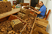 cigars and tobacco leaves, worker, man, manufacture of cigars, Brena Alta, UNESCO Biosphere Reserve, La Palma, Canary Islands, Spain, Europe