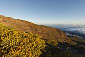 view northwards, sea of clouds over the Atlantic Ocean, lat. Adennocarpus viscosus, endemic plant, near Pico de la Cruz, crater rim, Caldera de Taburiente, Parque Nacional de la Caldera de Taburiente, Nacional Park, UNESCO Biosphere Reserve, La Palma, Can