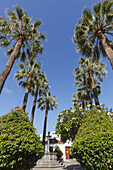 Fan palms, Plaza Chica, Plaza Elias Santos Abreu, square, Calle Fernandez Tano, old town, Los Llanos de Aridane, UNESCO Biosphere Reserve, La Palma, Canary Islands, Spain, Europe