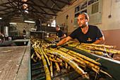 sugar cane press, rum factory, worker, man, near Puerto Espindola, east coast, Atlantik, near San Andres, San Andres y Sauces, UNESCO Biosphere Reserve, La Palma, Canary Islands, Spain, Europe