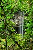 Shellburg Falls along Shellburg Falls Trail, Santiam State Forest, Oregon.