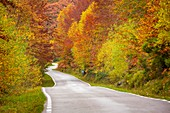 Nature landscape, autumn colors. Las Machorras, Burgos. Castile and Leon Spain, Europe.