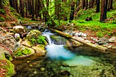 Hare Creek and redwoods, Limekiln State Park, Big Sur, California USA.