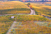 Rows of orange, yellow and green vineyards on the hill in autumn in Piedmont, Northern Italy, Europe
