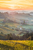 Sunrise in wine region. Spicnik, Kungota, Drava region, Slovenia.