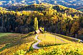 The heartshaped road at sunset. Spicnik, Kungota, Drava region, Slovenia.