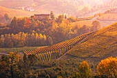 Langhe, Piedmont, Italy. Autumn landscape with vineyards