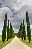 Italy, Tuscany, Orcia valley, farmhouse Poggio Covili at Castiglione d'orcia, provence of Siena