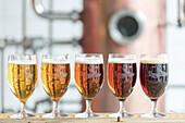 Close up of glasses of beer, Foroya Bjor family brewery, Klaksvik, Bordoy Island, Faroe Islands
