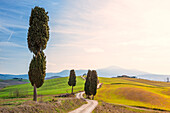 Gladiator rads in spring season Europe, Italy, Tuscany, Orcia valley, Pienza