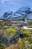 Moss-covered rocks with Stjerntinden in background, Lofoten, Nordland, Norway