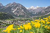 Yellow flowers frames the village of Bormio Stelvio National Park Upper Valtellina Lombardy Italy