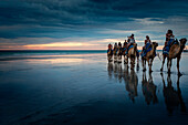 Camel tour ride at Cable Beach, Broome, Kimberley, Western Australia