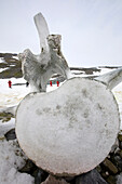 Photograph of whale vertebrae, Curverville Island on the Antarctic Peninsula, which is one of the fastest warming places on the planet, with a whale vertebrae.