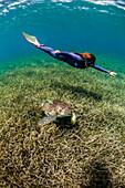Woman freediving with turtle underwater, West End, West Bay, Roatan, Honduras