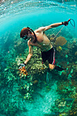 A man holds a speared Lobster underwater in the Caribbean.