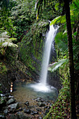 Majestic natural scenery with man standing below one of San Diego waterfalls in El Yunque Rainforest, Rio Grande, Puerto Rico
