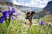 Young female backpacker hiking among wildflowers in Ordesa valley in Pyrenees, Ordesa y Monte Perdido National Park, Huesca, Aragon, Spain