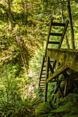 A mid adult woman climbs one of the many ladders found along the West Coast Trail in Pacific Rim National Park on Vancouver Island, British Columbia, Canada