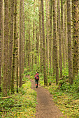 Rear view of female backpacker walking along footpath through forest while hiking along West Coast Trail, Pacific Rim National Park on Vancouver Island, British Columbia, Canada