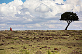 Distant view of lone Masai man walking in savannah, Masai Mara National Reserve, Kenya