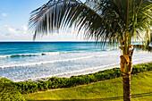 Palm tree near beach edge as waves breaking late in day in Puerto Morelos, Yucatan Peninsula, Mexico