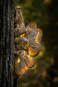Beautiful nature photograph of a single mushroom growing on a tree