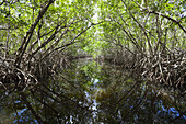 Mangroves, Cancun, Yucatan, Mexico