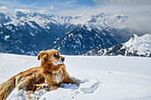 Dog laying in snow and looking towards snow-covered mountains, Ankogel Group, Hohe Tauern range, Carinthia, Austria