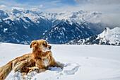 Hund liegt im Schnee und blickt auf verschneites Bergpanorama, Ankogelgruppe, Hohe Tauern, Kärnten, Österreich