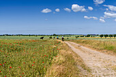 Pathway, Poppy, Horse, Rider, Wulfen, Fehmarn, Baltic Sea, East-Holstein, Schleswig-Holstein, Germany, Europe
