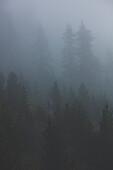 Climber in the misty forest, E5, Alpenüberquerung, 4th stage, Skihütte Zams,Pitztal,Lacheralm, Wenns, Gletscherstube, Zams to  Braunschweiger Hütte, tyrol, austria, Alps