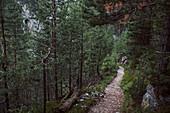 Long distance path through a coniferous forest, E5, Alpenüberquerung, 3rd stage, Seescharte,Inntal, Memminger Hütte to  Unterloch Alm, tyrol, austria, Alps