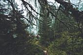 Signposting in the foggy forest with climber in the background, E5, Alpenüberquerung, 4th stage, Skihütte Zams,Pitztal,Lacheralm, Wenns, Gletscherstube, Zams to  Braunschweiger Hütte, tyrol, austria, Alps